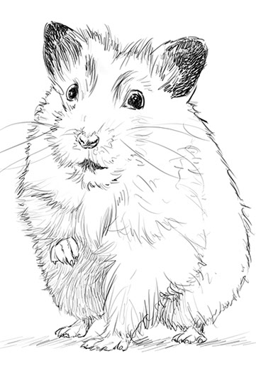 Hamster sympa dessin d'animaux