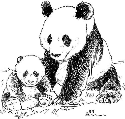Dessins et illustrations r alistes pour la p dagogie - Dessins de panda ...